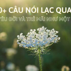 90+ câu nói lạc quan giúp bạn yêu đời và trẻ mãi như một bông hoa