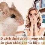 15 cách đuổi chuột trong nhà dân gian nhân đạo và hiệu quả
